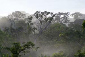アフリカ・コンゴ共和国に残された熱帯林。森林保全は有効な地球温暖化対策だとされる=2013年