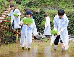 雨の中、田植えをする学生たち=東松浦郡玄海町の浜野浦の棚田