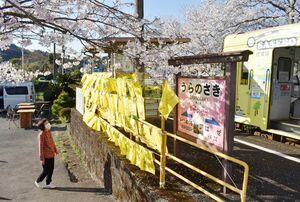 桜の名所に掲げられた黄色いハンカチ=伊万里市山代町のMR浦ノ崎駅