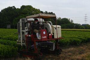 茶摘み機で桑の葉を刈り取る神埼和桑部会の会員=神埼市神埼町尾崎