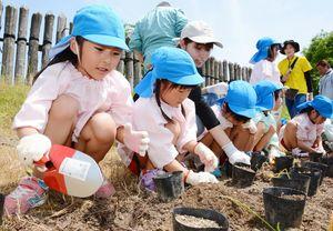 汗をかきながら、スコップで懸命に穴を掘る園児たち=吉野ケ里歴史公園