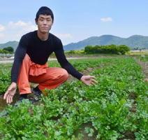 JA岡山パクチー部会長の秋山佳範さんが栽培するパクチー=5月、岡山市