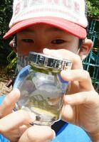 メダカのミニ水槽に見入る児童=多久市の南部小南渓分校跡
