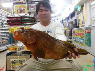 佐賀市の石川さん1投目で巨大アコウ