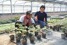 インドネシアの農業研修生奮闘